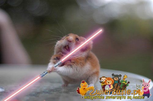 Star Wars - Chomik