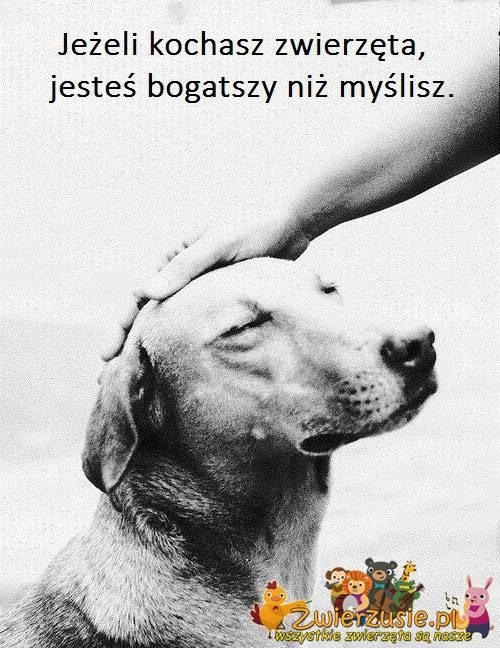 Kochasz zwierzęta ?